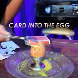 CARD INTO THE EGG (Carte dans l'Oeuf)